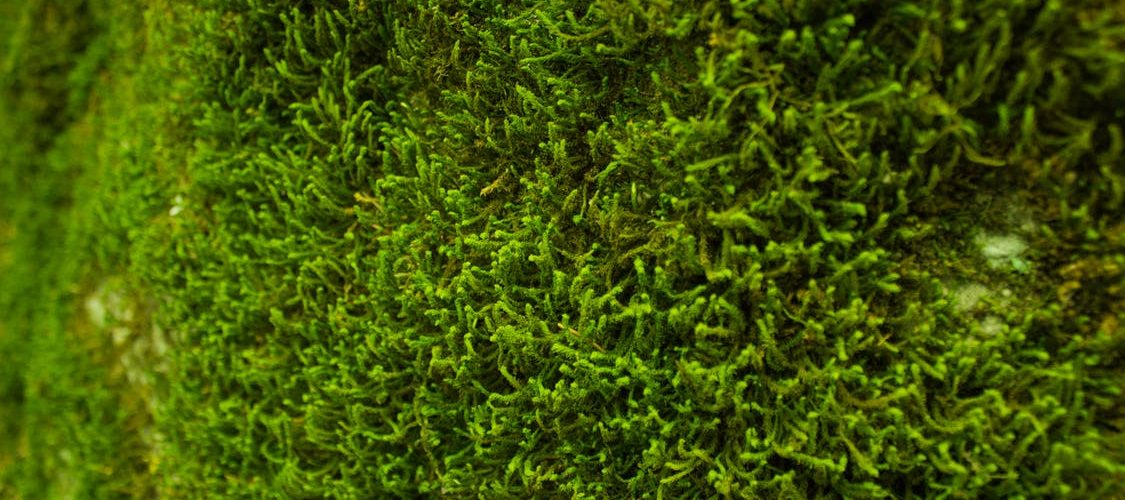 How to Fix a Moss Problem on a Lawn