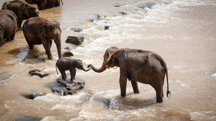Photo of elephants taken during an African Safari trip.